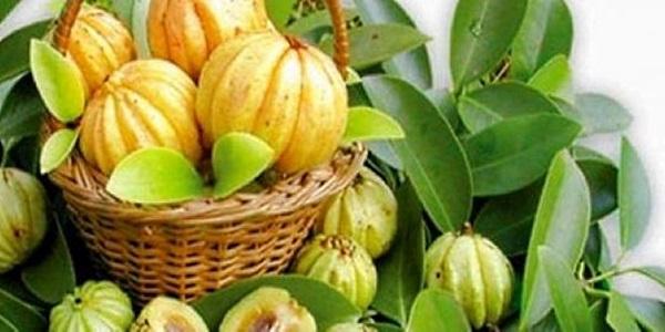 Φρούτα και φυτό garcinia cambogia